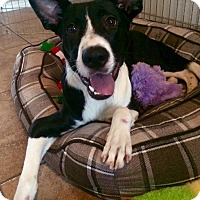 Adopt A Pet :: Hope - San Antonio, TX