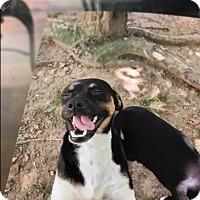 Adopt A Pet :: Romeo - Hohenwald, TN