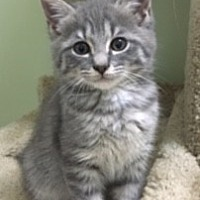 Adopt A Pet :: Beowulf - Knoxville, TN