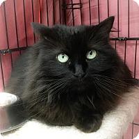 Adopt A Pet :: Zodiak - Webster, MA
