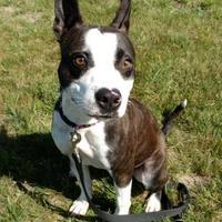 Adopt A Pet :: Josie - Monticello, IA