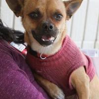 Adopt A Pet :: Keith - Tulsa, OK