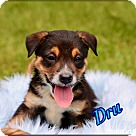 Adopt A Pet :: Dru-Boy