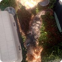 Adopt A Pet :: Candy - Benton, PA