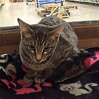 Adopt A Pet :: Fuzzie - Warrenton, MO