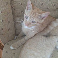 Adopt A Pet :: Pasito - Washington, DC
