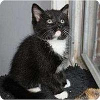 Adopt A Pet :: SEAMUS - Oxford, CT