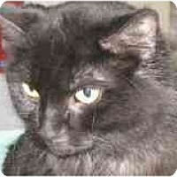 Adopt A Pet :: Mindy - Markham, ON