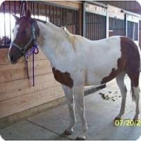Adopt A Pet :: Mayuel - Pueblo, CO