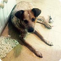 Adopt A Pet :: Sammy - Carey, OH