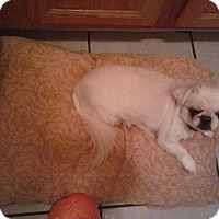 Adopt A Pet :: Spritzer - DAYTON, OH