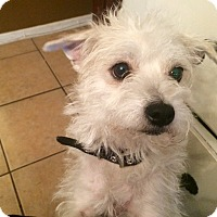 Adopt A Pet :: Sallie - Burbank, CA
