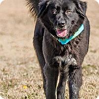 Adopt A Pet :: JJ  the Jewel - plano, TX