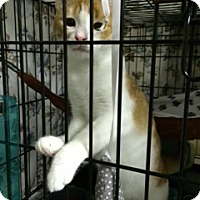 Adopt A Pet :: Chuckie - Byron Center, MI