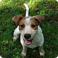 Adopt A Pet :: Alan - Cranford, NJ