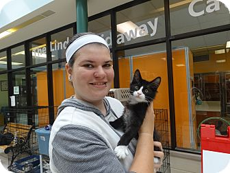 Domestic Mediumhair Kitten for adoption in Elyria, Ohio - Kole