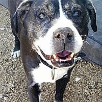 Adopt A Pet :: Bristow - New River, AZ