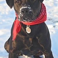 Adopt A Pet :: Quin - Saranac Lake, NY