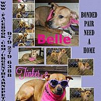 Adopt A Pet :: Belle - Hearne, TX