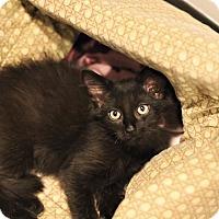 Adopt A Pet :: Paku - Lincoln, NE