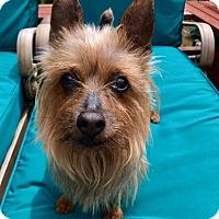 Adopt A Pet :: Betsy - Gig Harbor, WA