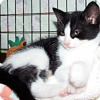 Adopt A Pet :: Nuggett - Grants Pass, OR