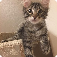 Adopt A Pet :: Deacon - LaGrange Park, IL