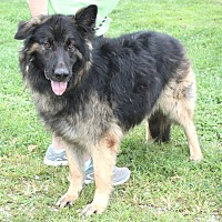 Adopt A Pet :: Stonewall - available 8/20 - Sparta, NJ