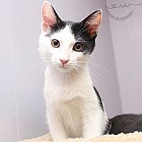 Adopt A Pet :: A..  Jared - Charlotte, NC