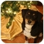 Photo 2 - Labrador Retriever/Australian Cattle Dog Mix Dog for adoption in Nanuet, New York - Castanza