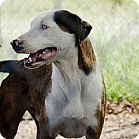 Adopt A Pet :: Dillon - Justin, TX