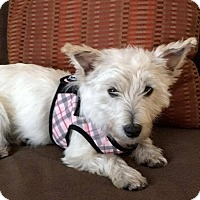 Adopt A Pet :: Harper - Omaha, NE