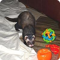 Adopt A Pet :: Roman - Acworth, GA