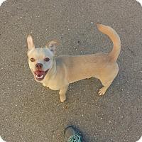 Adopt A Pet :: EJ - Meridian, ID