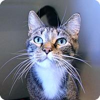 Adopt A Pet :: Kit Kat - Lincoln, NE