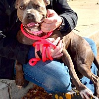 Pit Bull Terrier Mix Dog for adoption in Alpharetta, Georgia - AllyMay