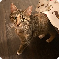 Adopt A Pet :: Tawni - Huntington, WV