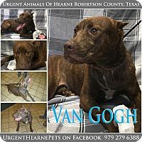 Adopt A Pet :: Van Gogh - Hearne, TX
