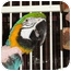 Photo 2 - Macaw for adoption in Vancouver, Washington - Willie