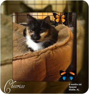 Calico Cat for adoption in Mobile, Alabama - Cheerioo