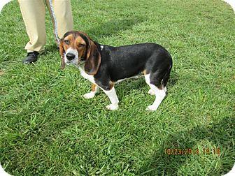 Beagle Mix Dog for adoption in LaGrange, Kentucky - DAISY