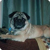Adopt A Pet :: Mortimer - Mt Gretna, PA