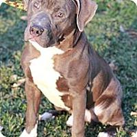 Adopt A Pet :: Sanders - Reisterstown, MD
