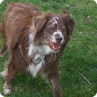 Adopt A Pet :: Sammie - VIDEO - Monrovia, CA