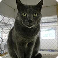 Domestic Shorthair Cat for adoption in East Smithfield, Pennsylvania - Alane
