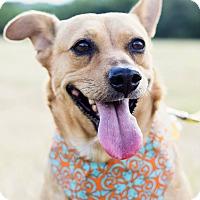 Adopt A Pet :: Sierra - Austin, TX