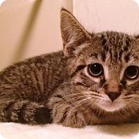 Adopt A Pet :: Zander - Lebanon, PA