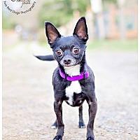 Adopt A Pet :: Sammie Boy - Seattle c/o Kingston 98346/ Washington State, WA