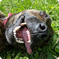 Adopt A Pet :: Jimmy Frank - Lisbon, OH