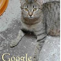 Adopt A Pet :: Google - Ozark, AL